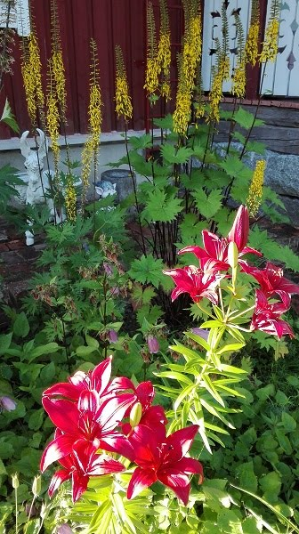 Nauhuksia, liljoja, pisamakelloa ja Rosa Mundi