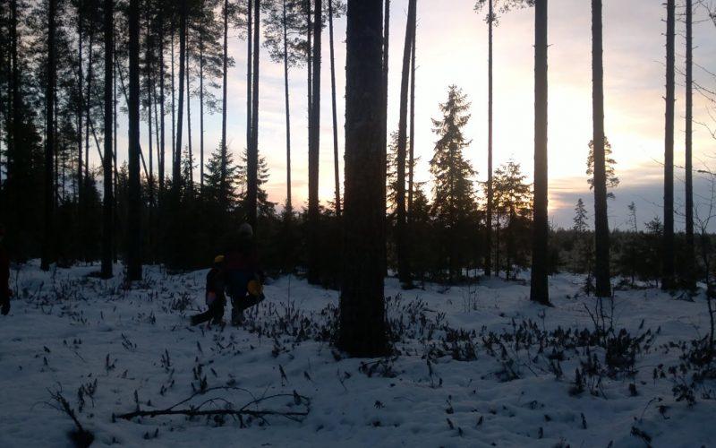 joulukuusen haku metsästä