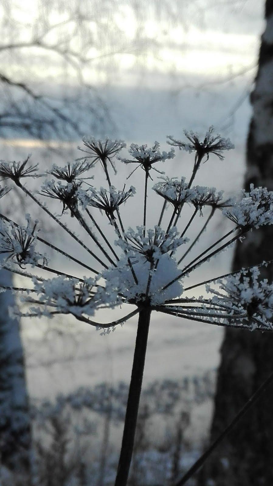 Marraskuun usvaa ja lunta vihdoinkin
