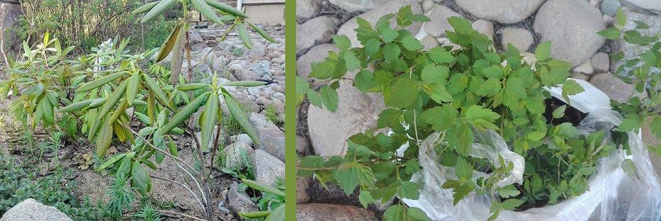 taimia puutarhaan