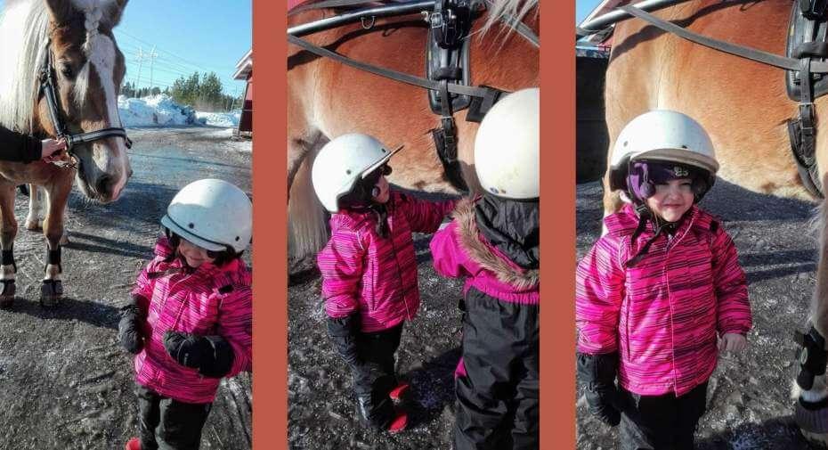 Hevosta on kiva hoitaa.