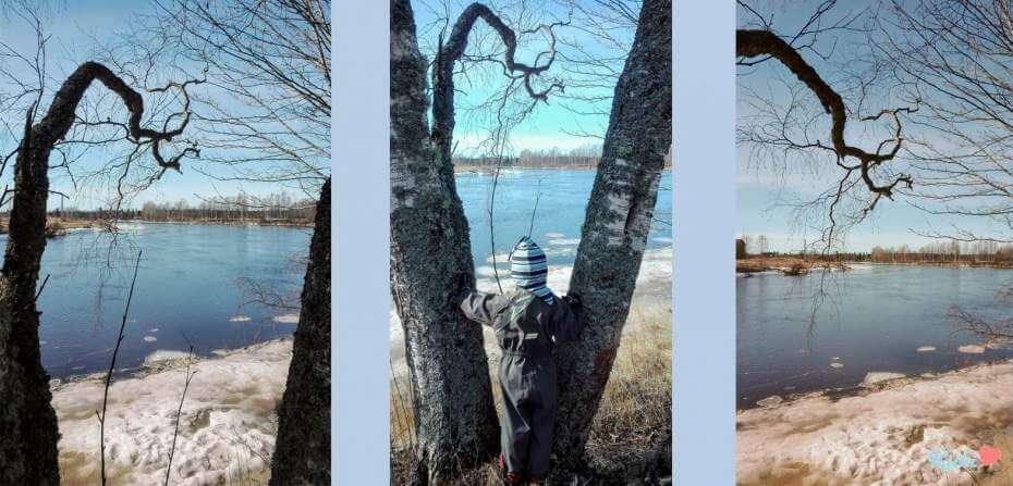 Oodi keväälle: kevätruno sekä kuvia ja video joelta ja metsästä