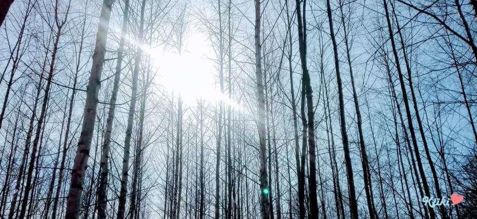 Keväthetki nuoressa metsässä.